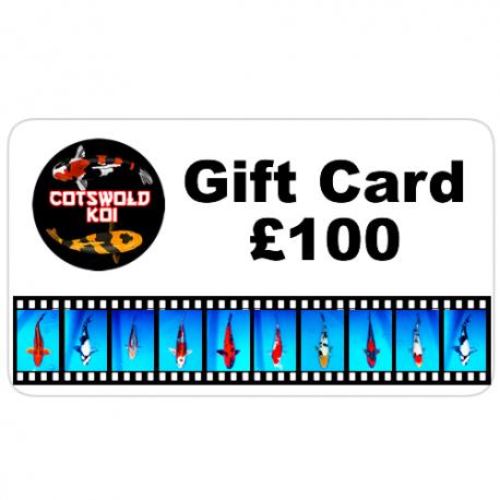 gift card-100
