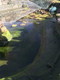 pond-clean-swindon-wiltshire-1
