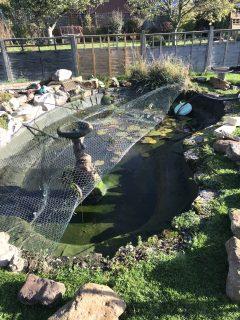 pond-clean-swindon-wiltshire-2