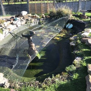 pond-clean-swindon-wiltshire-2
