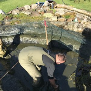 pond-clean-swindon-wiltshire-3