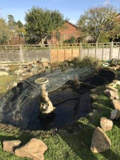pond-clean-swindon-wiltshire-5