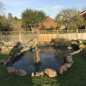 pond-clean-swindon-wiltshire-6
