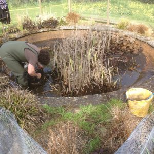 pond-cleaning-asscot-oxfordshire-1