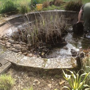 pond-cleaning-asscot-oxfordshire-3