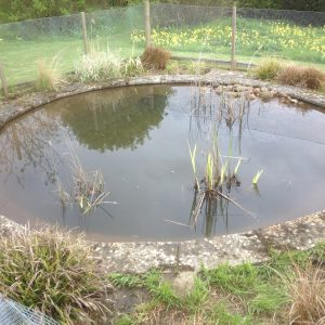 pond-cleaning-asscot-oxfordshire-5